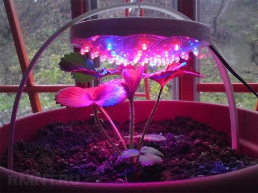 Какие лампы нужны для выращивания растений дома